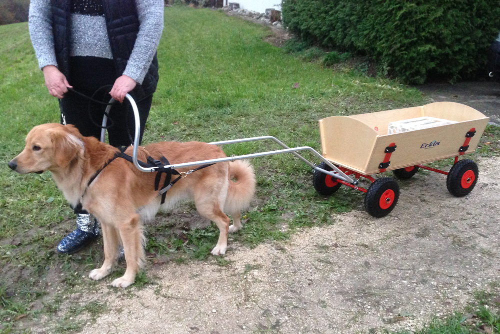 Hund-mit-Bollerwagen