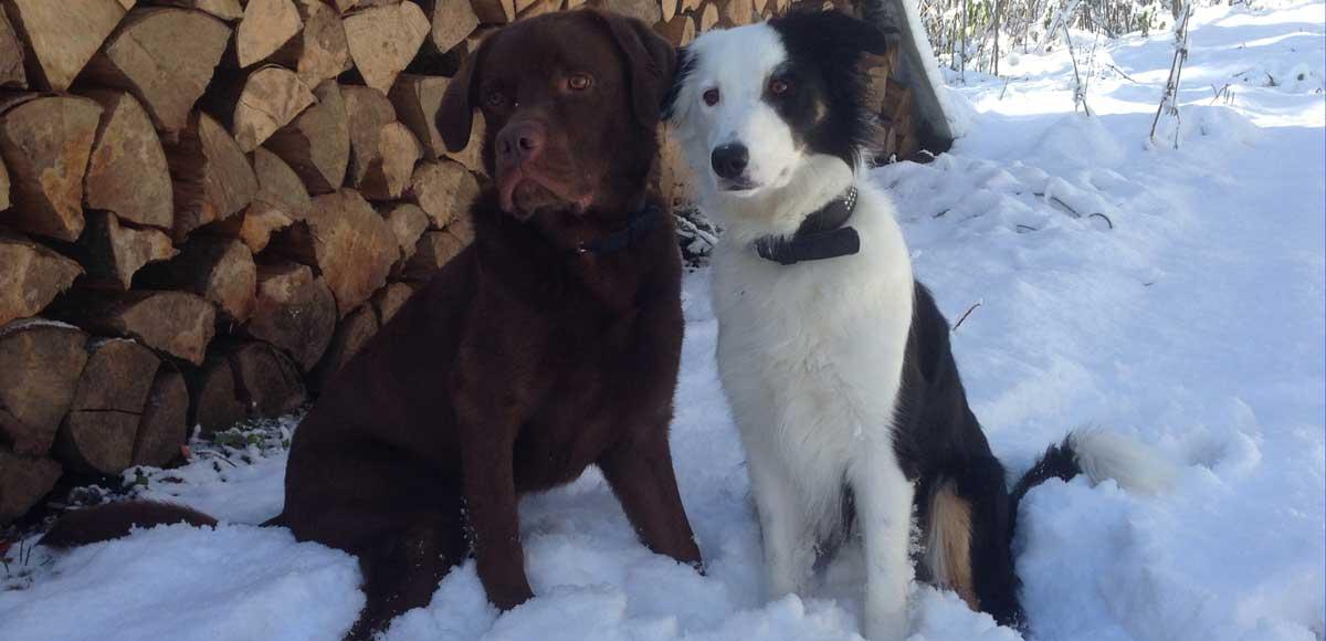 Hundetraining im Schnee