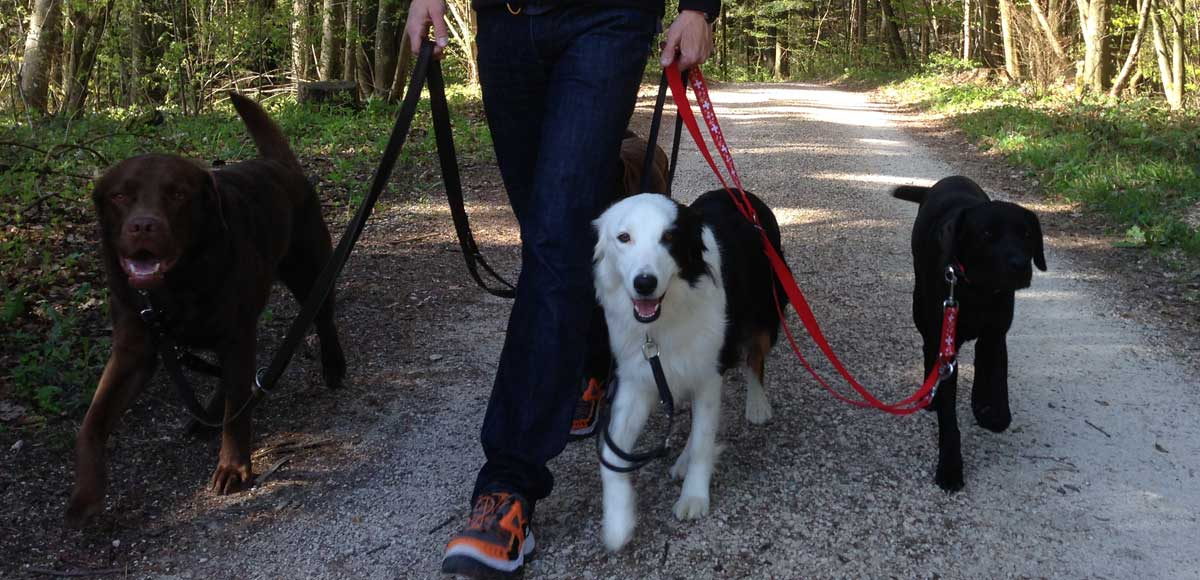 Hundeschule Solothurn